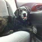Jake in the car