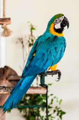 This parrot is resting, like your past clients